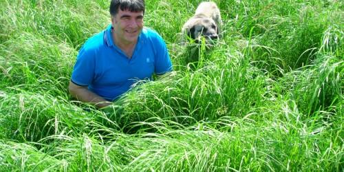 Ot Tipi Teff Grass Tohumu Nasıl Ekilir